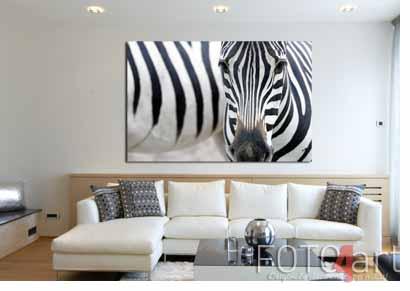 Foto op forex zebra