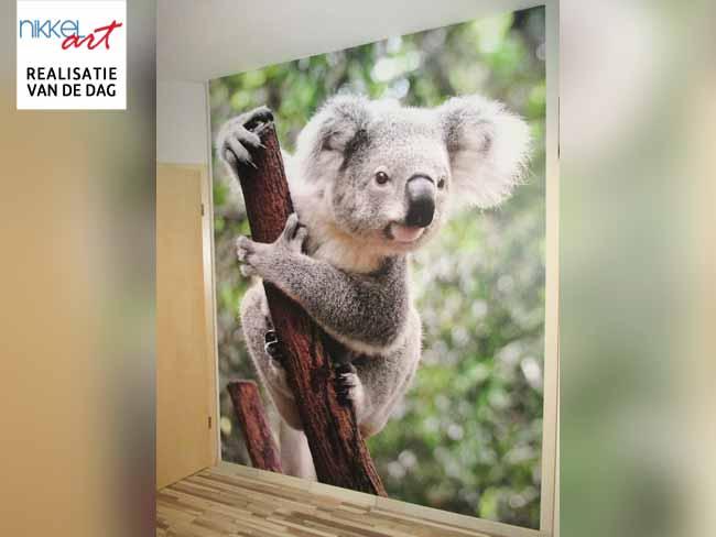 Fotobehang Koala